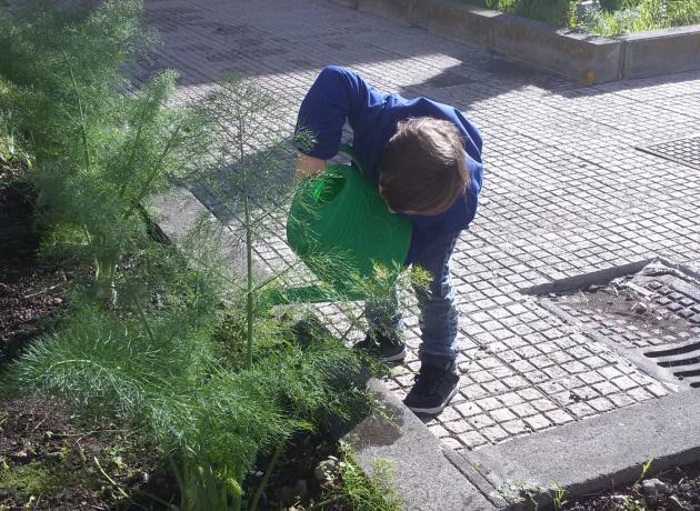i bimbi si prendono cura dell'orto ricavato nelle aiuole del cortile scolastico. A.s. 201572016